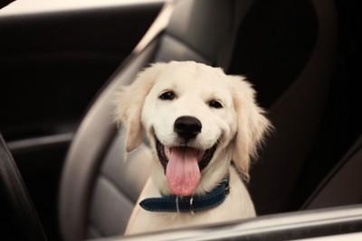 嬉しそうな子犬