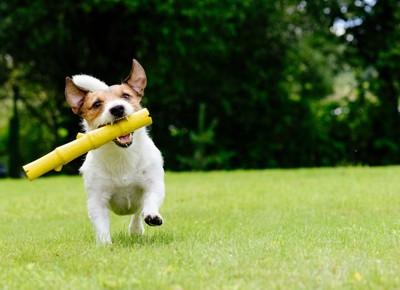 筒状のものをくわえて走る犬