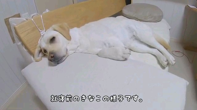就寝前の~字幕