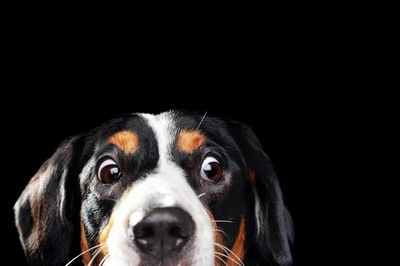 ビックリ表情の犬