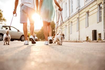 3頭の犬を散歩させる男女の後姿