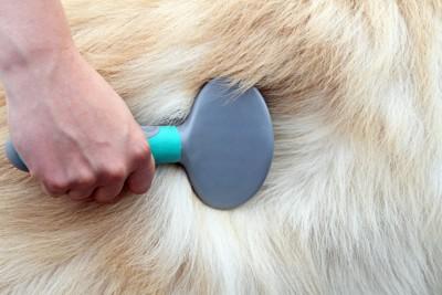 ブラシと犬の毛のアップ