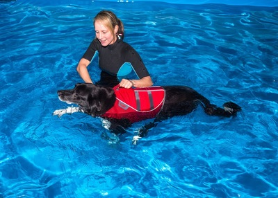 プールでトレーニング中の犬