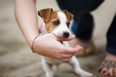 人間の手で遊んでいる犬