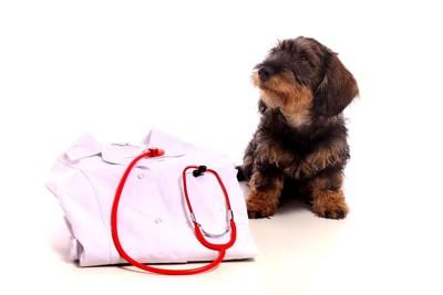 獣医の服と犬 38676029