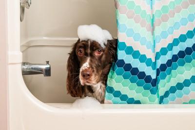 シャワー室からこちらを覗き込む犬