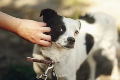 顔を触られて少し嫌そうな顔をする犬