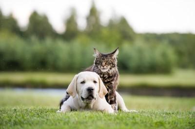 犬の上に乗っている猫