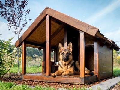 犬小屋に入るドーベルマン