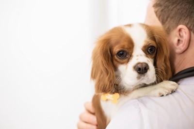 抱きかかえられる犬