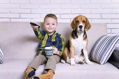 ソファーに座ってテレビを見る犬と男の子