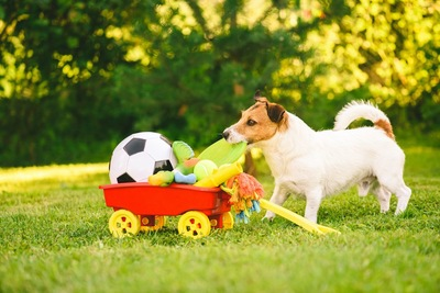 芝生の上に置かれたおもちゃと犬