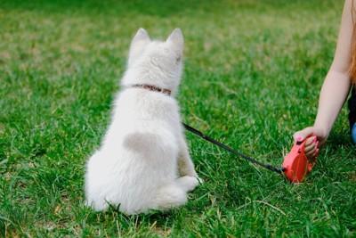 赤い伸縮リードと白い子犬