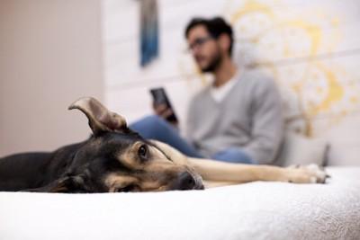 スマホを持つ男性と退屈そうな犬