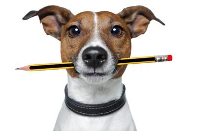 鉛筆をくわえる犬