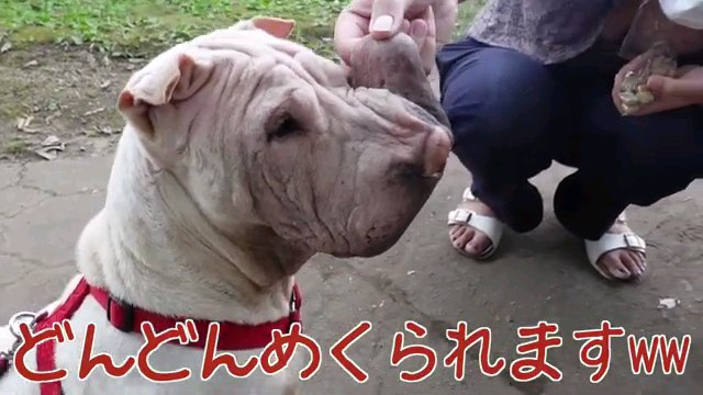 どんどん~字幕