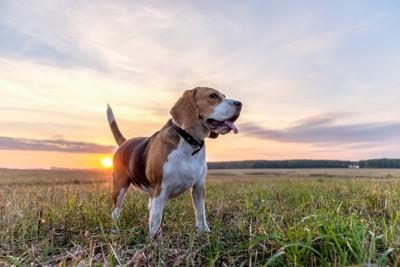 しっぽを立てている犬の写真
