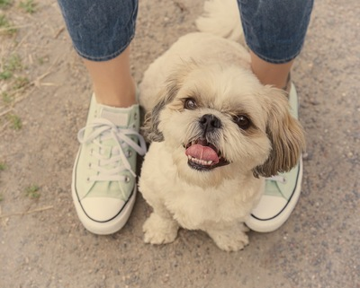 足元から見上げる犬