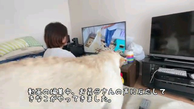 動画の~字幕