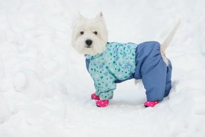 服と靴を着用して雪の上に立つ白い犬
