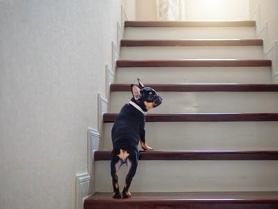 階段を上る犬