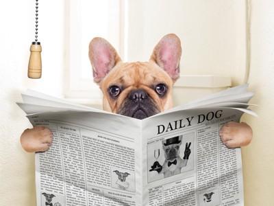 トイレに座って新聞を読む犬