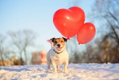 犬とハートの風船