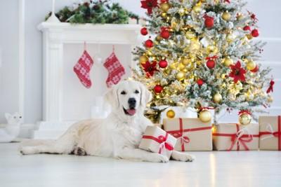 クリスマスツリーとゴールデン