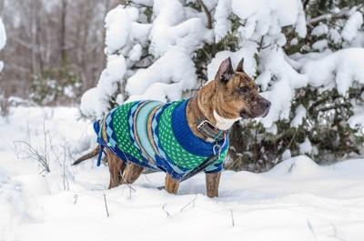 服を着て雪の中を散歩する犬