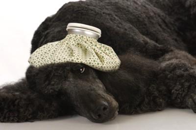 黒い犬が横たわっている