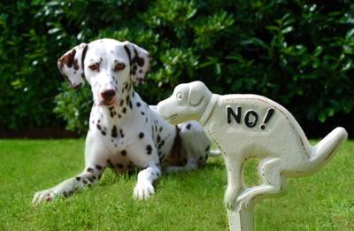 NOの看板と犬