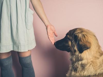 人の手のにおいをかぐ犬