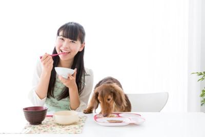 一緒に机で食事を摂る女性とダックスフント
