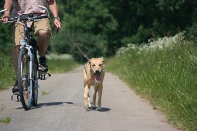自転車につながれて走る犬