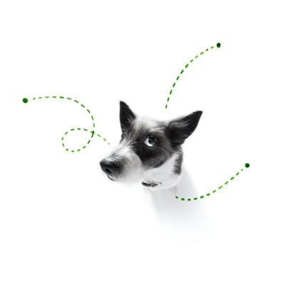 上を見て考え事をしている犬とノミのイメージ