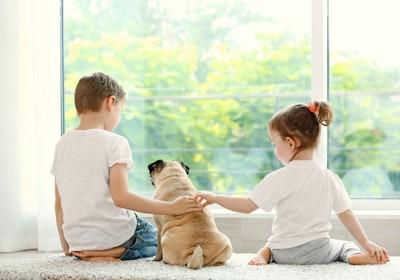 男の子と女の子に背中を撫でられるパグ