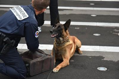 パートナーの指示を聞く警察犬