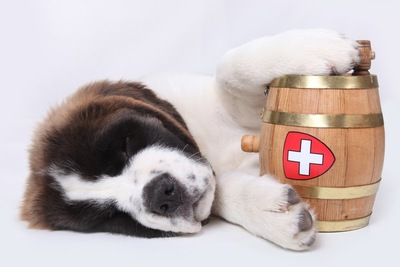 樽とセントバーナード子犬