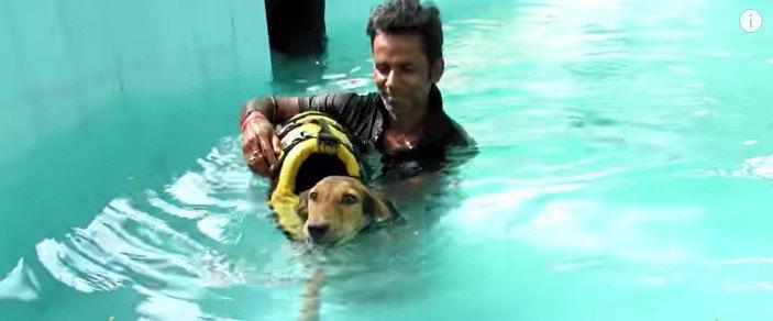 プールで治療をうける犬