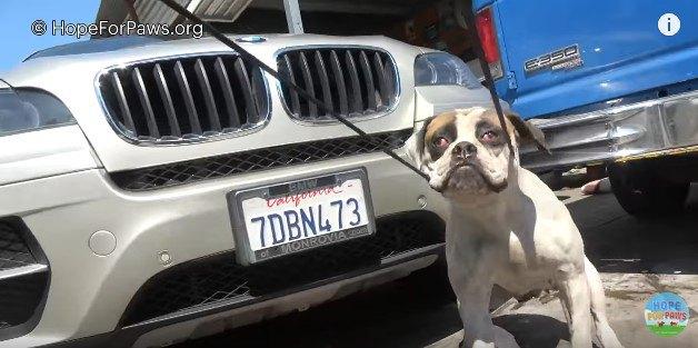 引っ張り出された犬