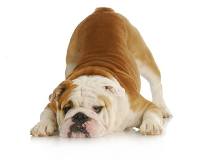 お腹が痛い犬