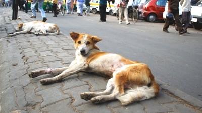 道端で寝そべる2匹の野良犬