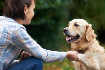 握手をする犬と女性