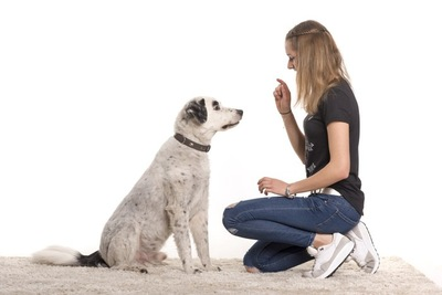 座っている犬と指示を出す女性