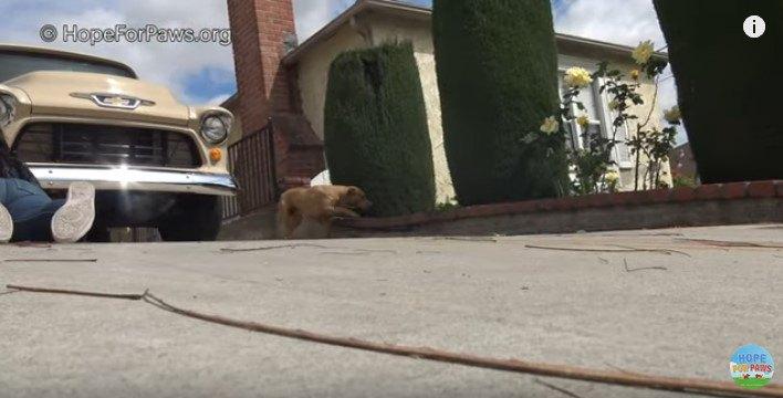 隣家へ逃げる犬