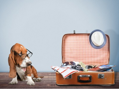 犬と旅行の荷物