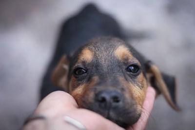 犬を触る手