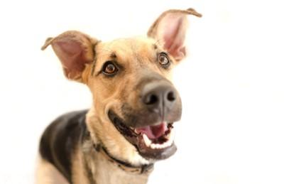 笑顔でこちらを見る犬