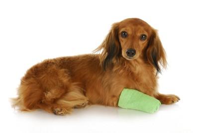 怪我をした犬
