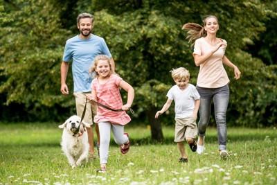 家族と一緒に走る犬